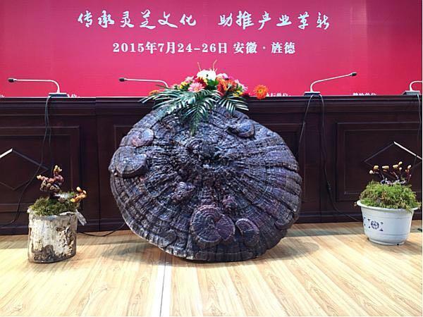 菇新灵芝带您参观中国灵芝峰会