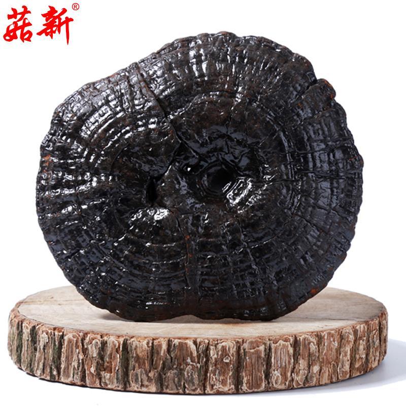 菇新 紫灵芝  500克/袋
